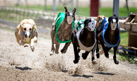 Greyhound Live Racing